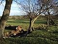 Stream near Throat Wood - geograph.org.uk - 306235.jpg