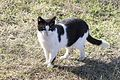 Street Cat, Adana 2016-12-10 07-1.jpg