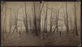 Stroll in 'Hollywood,' Long Branch, N.J, from Robert N. Dennis collection of stereoscopic views.png