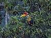 Sulawesi trsr DSCN0762 v1.JPG