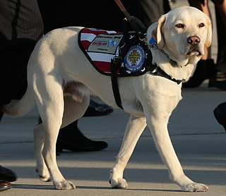 Sully (dog) Service dog of George H.W. Bush