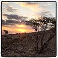 Sunset through tree at Jebel Hafeet.jpg