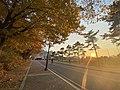 Sunshine and maple trees.jpg