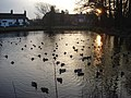 Swan Pool at sundown - geograph.org.uk - 637775.jpg