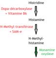 Synthèse de l'histamine.png