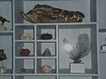 SystemaNaturaEtnografiska museet (3).JPG