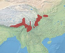 Distribution of the takin