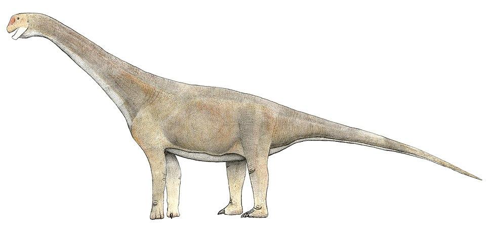 Tehuelchesaurus benetezii