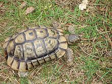 vente tortue terrestre trouvez le meilleur prix sur voir avant d acheter