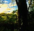 The Bright Sunrise.jpg