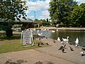 The Canal at Newbury - geograph.org.uk - 135833.jpg