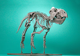 The Childrens Museum of Indianapolis - Prenoceratops pieganensis -1.jpg