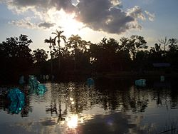 The Fairchild Botanical Gardens.jpg