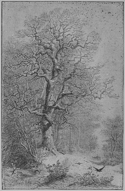 The Oak (Marshall Ward) Plate II.jpg