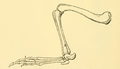 The Osteology of the Reptiles-210 dfgh fgh dfggf bhg f ert frt.png