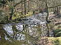 The River Meavy near Clearbrook - geograph.org.uk - 117629.jpg