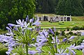 The Rozendaal castle shell gallery through a nice Agapanthus (loveflower) decoration - panoramio.jpg