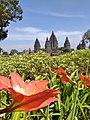 The beauty of Prambanan Temple.jpg