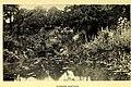 The book of the wild garden (1903) (20391367582).jpg
