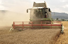 The combine Claas Lexion 584 in the wheat harvest.jpg