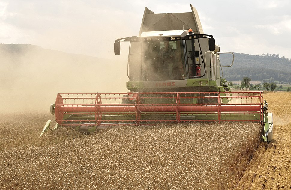 The combine Claas Lexion 584 in the wheat harvest