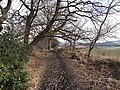 The path to Dilston - geograph.org.uk - 1723402.jpg