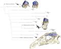 Therizinosaur endocranial elements.png