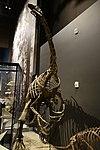 Therizinosaurus 1 salt lake city.jpg