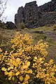 Thingvellir, Iceland (22272107816).jpg