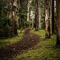 Through the trees - panoramio (2).jpg