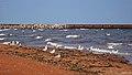 Tignish Shore Beach, Tignish Shore (471231) (24350161043).jpg