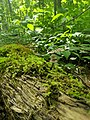 Tiny forest.jpg