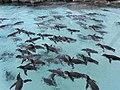 Tokyo Sea Life Park Kasai-5.jpg