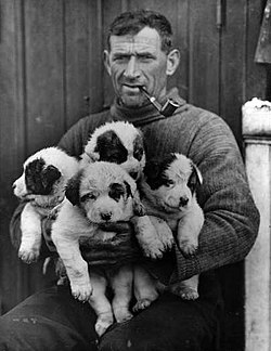 A rugged-featured man in a turtleneck jersey, pipe in mouth, is seated holding four small puppies, each mainly light-coloured with dark markings