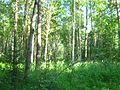 Tomsky District, Tomsk Oblast, Russia - panoramio (88).jpg