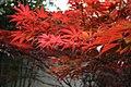 Tong Li Gardens-Maple tree.jpg