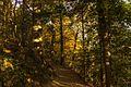 Trail to Dundas Peak - panoramio.jpg