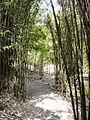 Trebah Bamboo.JPG