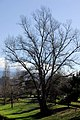 Tree (2254938773).jpg