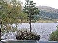 Tree Growing in Rock in Loch Voil - geograph.org.uk - 194889.jpg