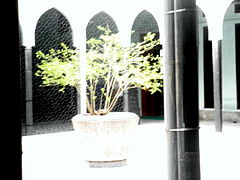 Tree Inside the Masjid.JPG