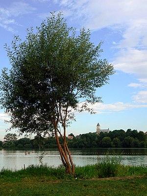 Biały Kościół, Lower Silesian Voivodeship - Tree by the lake near Biały Kościół