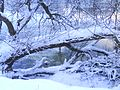 Tree covered in snow next to the river wear by Safc cal - panoramio.jpg