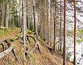 Tree roots3.jpg
