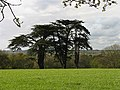 Trees, Padworth - geograph.org.uk - 5964.jpg