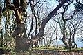 Trees, Telpyn - geograph.org.uk - 1293939.jpg
