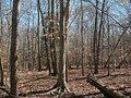Trees at the site of Lexington plantation.jpg
