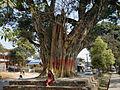 Treeshade Pokhara 2012.JPG