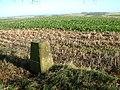 Triangulation Pillar, Knowle Hill, Wiltshire - geograph.org.uk - 92967.jpg