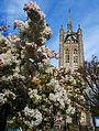 Trinity church and blossom, SUTTON, Surrey, Greater London.jpg